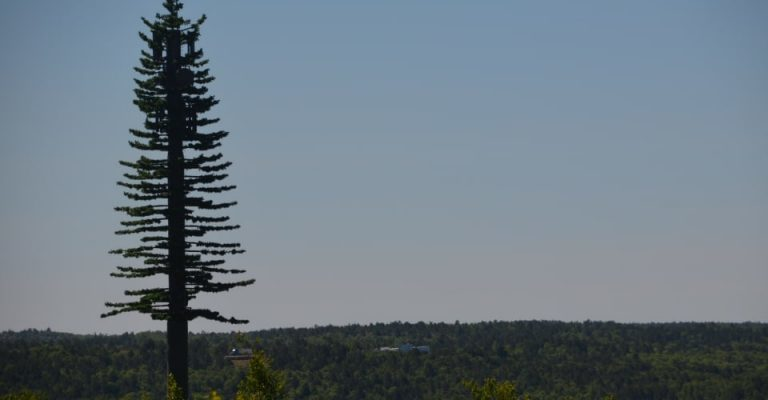 New conifer-shaped cell tower in Northern Ontario